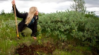 The Iceland Travel Reforestation Project