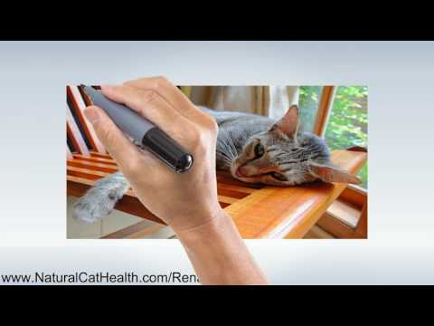 Video What Causes Kidney Failure in Cats and Proactive Solutions