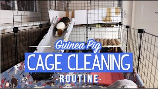 UPDATED! Guinea Pig Cage Cleaning Routine