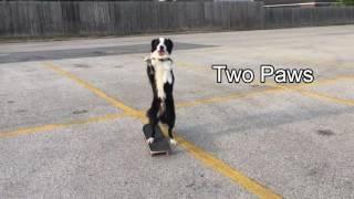 animale cainele pe skateboard