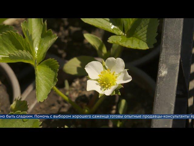 «Сады Сибири»: рецепт хорошего урожая