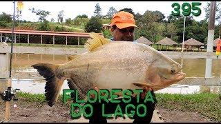 Os Tambacus do Floresta do Lago - Fishingtur na TV 395