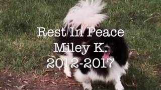 Rest In Peace Miley