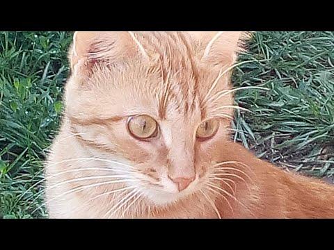 💥8 августа - день КОШЕК . Кошек🐱 праздник — Всемирный день кошачий!💥