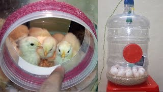 Egg Incubator - Results || How To Make An Egg Incubator Simple And Easy || (Homemade Incubator)
