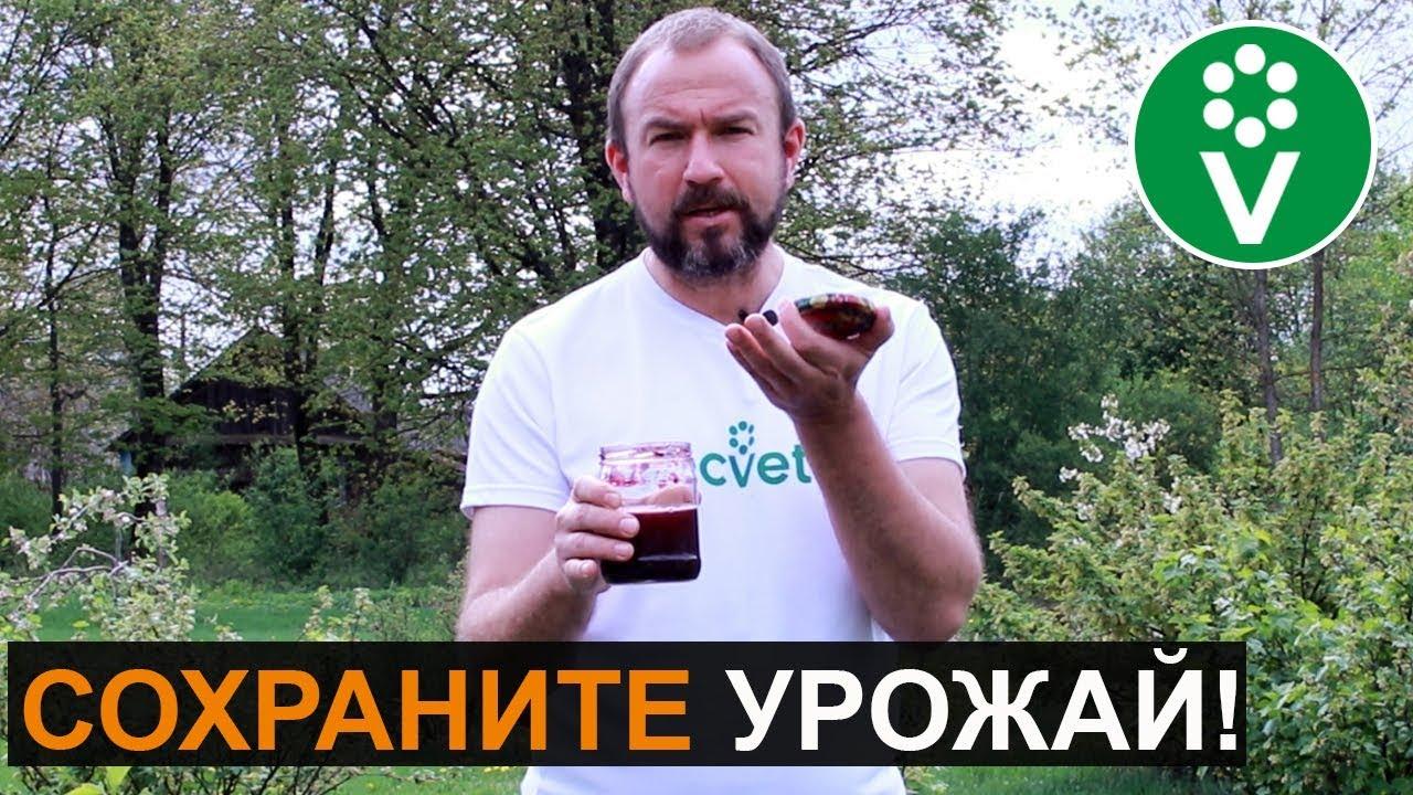БАНКА ВАРЕНЬЯ ПОД СМОРОДИНОЙ спасет от опасных вредителей!