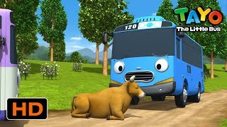 Tayo English Episodes l A Cow Blocks Tayo On the Road! l Tayo the Little Bus