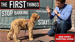 NEW PUPPY SURVIVAL GUIDE: Find out how to Begin Coaching ANY Canine to STOP Barking, Calm Down & Keep! (EP: 7)