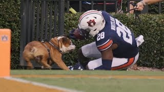 College Football Funniest Moments/Bloopers - September 2019