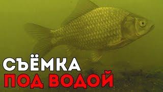 Как и чем кормить рыб в пруду