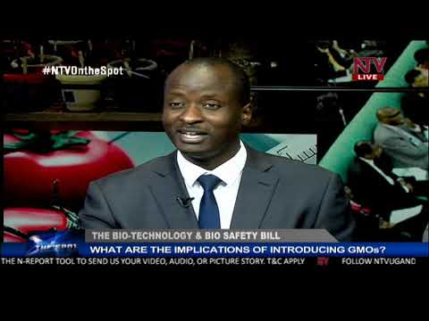 ON THE SPOT: The implications of introducing GMOs to Uganda