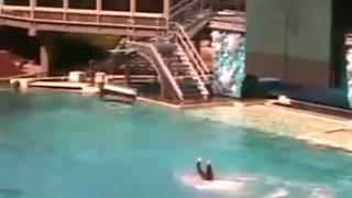 Killer Whale Attacks at Sea World! UNCUT VIDEO!!!!!
