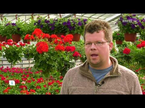 Balkonkisten bepflanzen