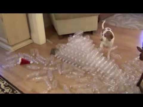 Подарок на день рождения для любимой собаки