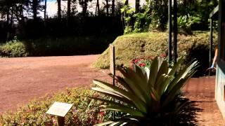 preview picture of video 'Colinas del Poas, Alajuela, Costa Rica Abril 05, 2015 Zipline'
