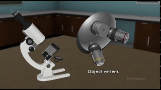How a compound microscope  works?
