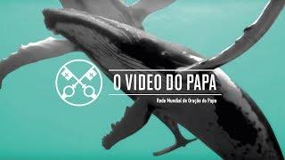 O Vídeo de Papa – Setembro de 2019 –  Proteção dos oceanos.