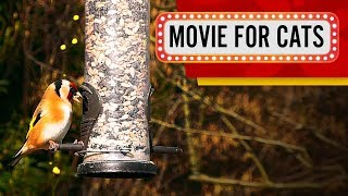Movie for Cats - Hungry Goldfinch (VIDEOS FOR CATS TO WATCH)