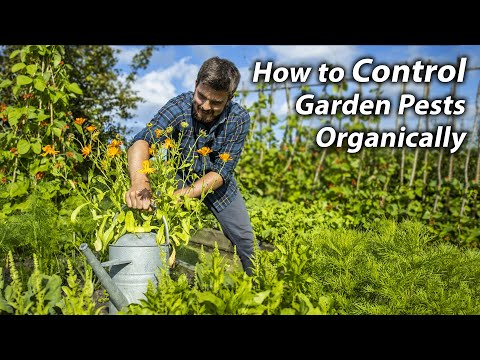 Permaculture Tips for Controlling Pests in the Veg Garden