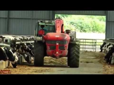 Video Makanan Ternak Penggemukan Sapi Potong atau Perah Cara Simple