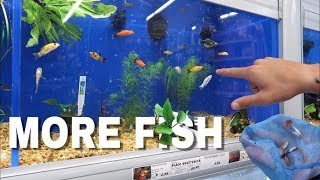 25 NEW COLORFUL FISH for Mini Pond!!