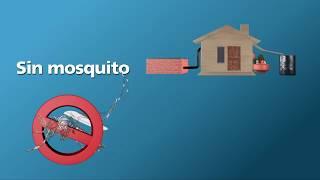 Zika ¿Cómo evitar los criaderos de mosquitos en tu patio?