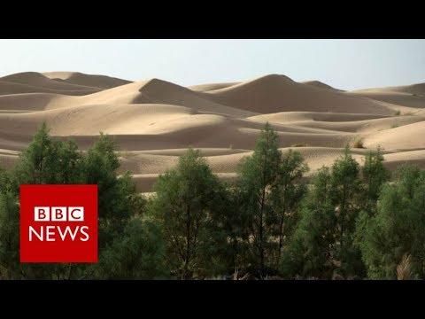 Pošumljavanje Sahare - Stvara se veliki zeleni zid Afrike (VIDEO)