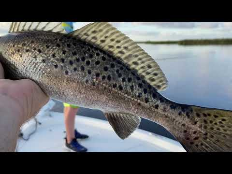 How to: Topwater Speckled Trout strategies that they can't resist!