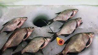 Зимняя рыбалка на подлещика снасти