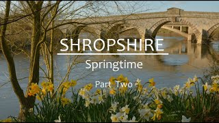 Shropshire Springtime Part Two
