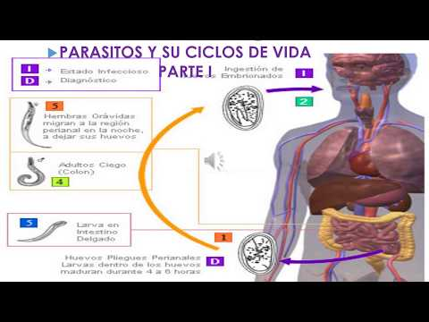 Cancer pancreas que es