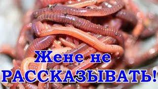 Чем кормить червей для рыбалки красные
