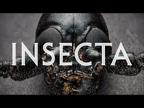 Parazitii timisoara 2020