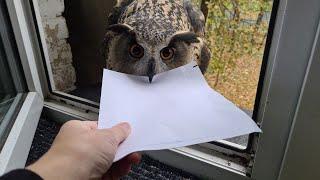 Сова принесла письмо. Но это не то письмо, которое я ждала