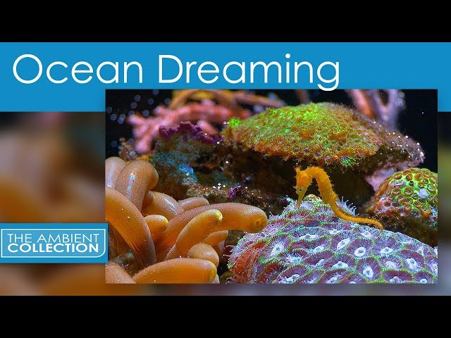 Relaxing Nature Scenes Of The Underwater - Ocean Dreaming