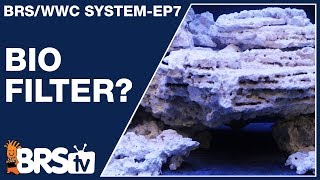 Harness bio-filtration for a stable, long term reef tank. The BRS/WWC System Ep7 | BRStv