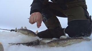Рыбалка на севере луда уна