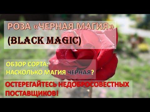 Черная связка черная магия