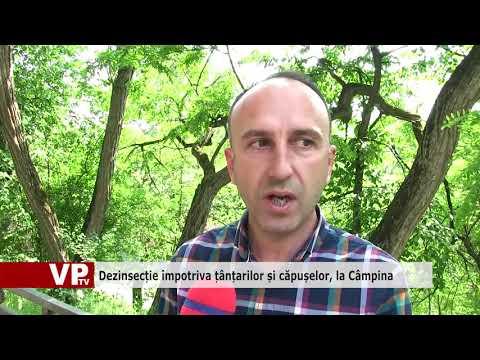 Dezinsecție împotriva țânțarilor și căpușelor, la Câmpina