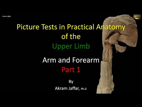Picture tests in anatomy arm and forearm 1