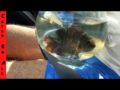Aquarium CATCHING Pet Exotic Fish