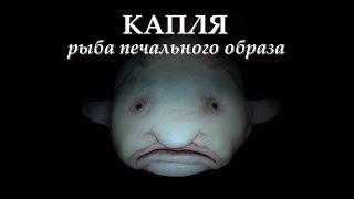 Рыба капля съедобна или нет