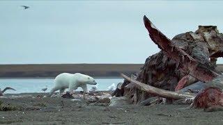 Top 5 North American Animals   BBC Earth
