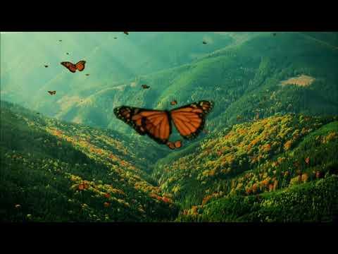 Msicas para Beb dormir Acalmar e relaxar com borboletas   Relaxamento Profundo