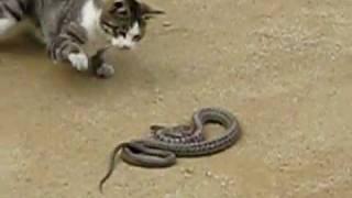 Война со змеями - Видео онлайн