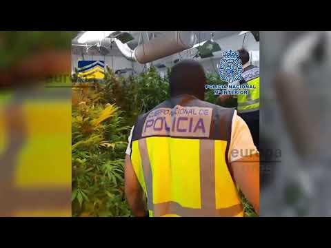 Captura Organización Que Operaba En Málaga, España y Polonia Desde 2009 - Policía España y Europol