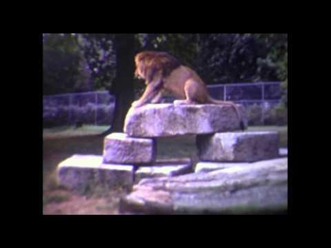 1971 Windsor Safari Park no music
