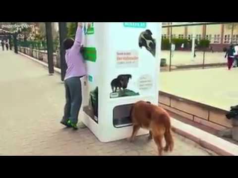 Empresa cria máquina que alimenta animais de rua em troca de garrafas pet