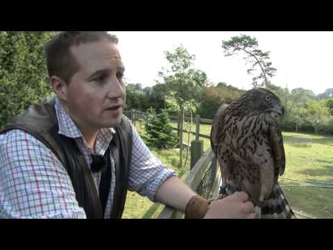 Fieldsports Britain – Birr Castle Game Fair + hawking rabbits
