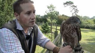 Fieldsports Britain – Birr Castle Game Fair + hawking rabbits (episode 93)